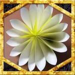 折り紙で菊の花の折り方!簡単立体的な作り方を紹介